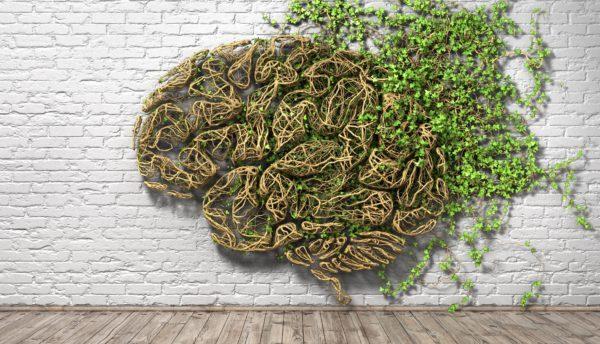formation art et neurosciences